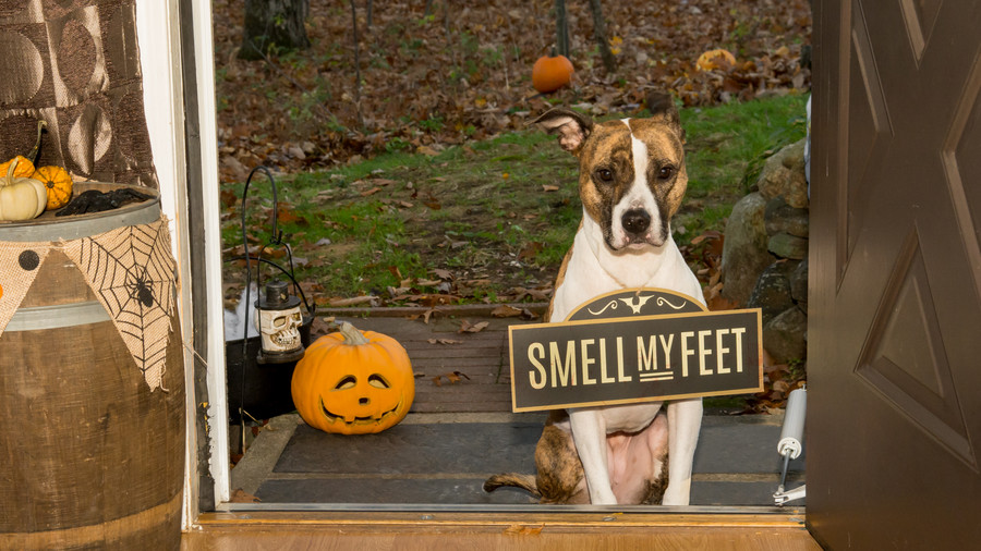 Dog with Smell My Feet Sign