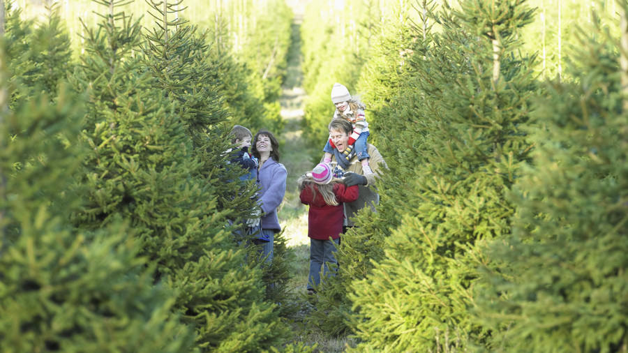 Frolic Around the Christmas Tree Farm