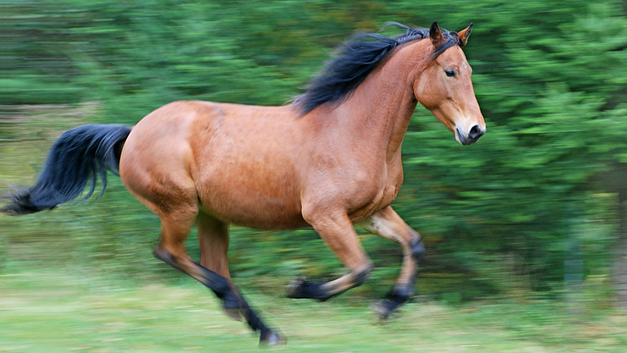 Tan horse galloping