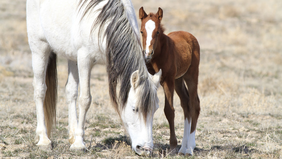 white horse and brown colt