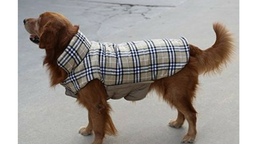 Gift Guide Pets Doggie Rain Jacket