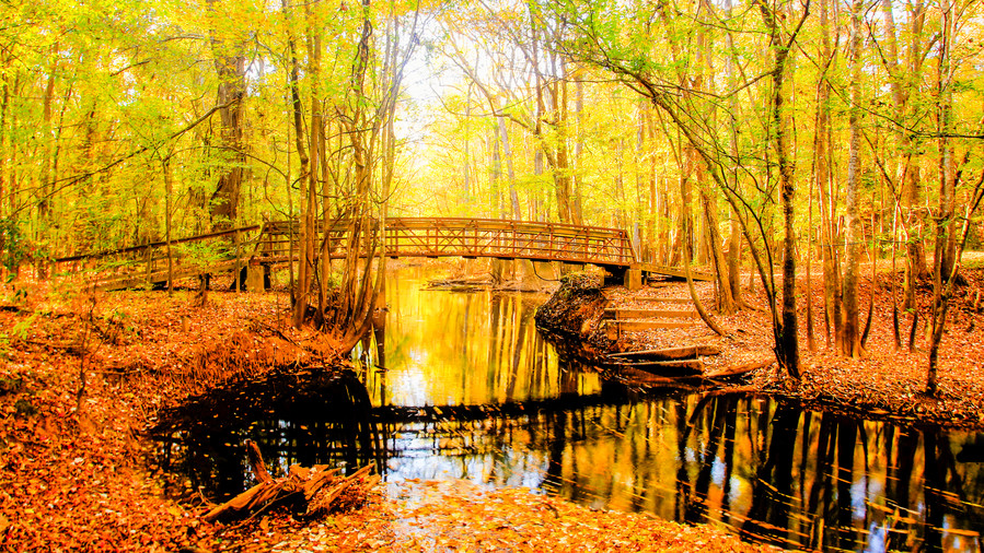 Southern Campgrounds Congaree National Park