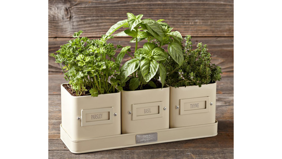 Herb Pots With Tray