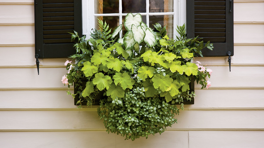 Container Garden Window Box