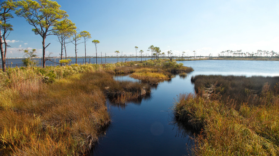 Take Your Camera: Bon Secour National Wildlife Refuge