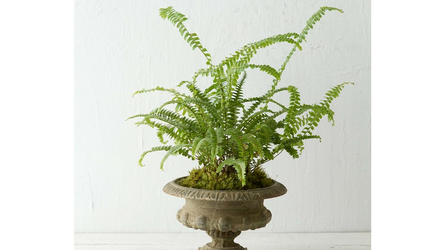 Pots for Indoor Plants iron urn