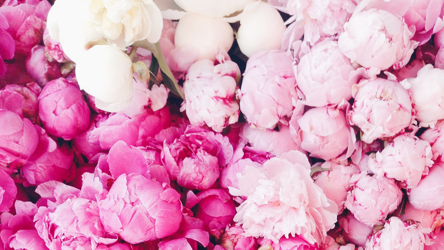 You can grow peonies in the South