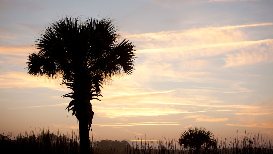 Palm Tree at the Beach Sunrise/Sunset
