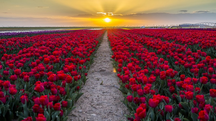 Tulips are likely the culprits behind the first economic crash.