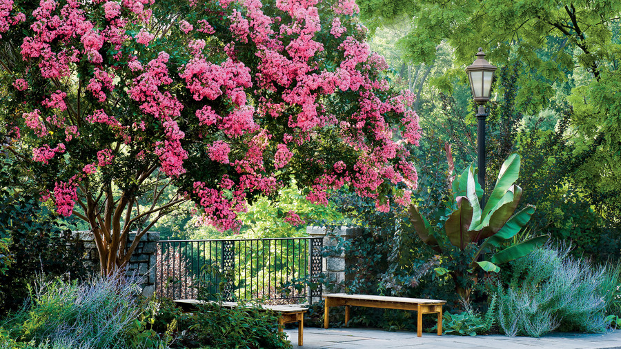 The souths most iconic flowers southern living crepe myrtle tree in park mightylinksfo