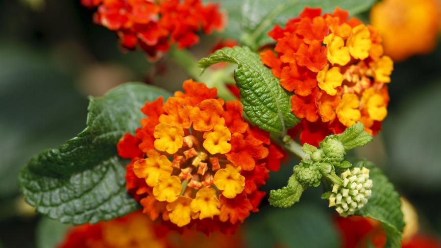 These Are the Best Plants If You Don't Have a Green Thumb
