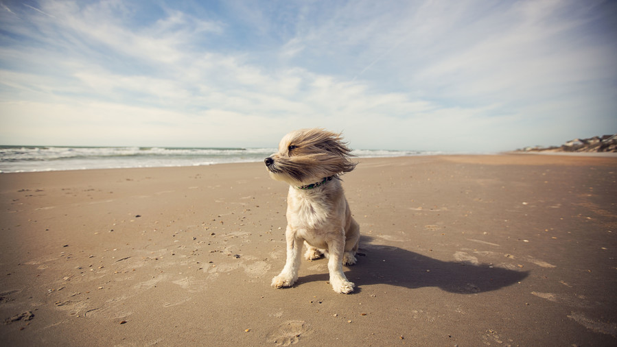 Florida's Best Off-Leash Dog Parks and Beaches - Southern ...