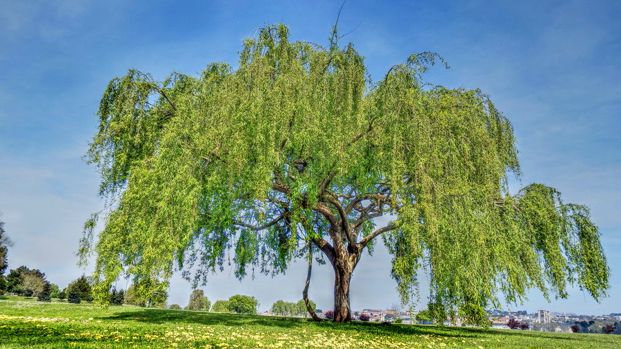 12 Trees That Will Ruin Your Yard