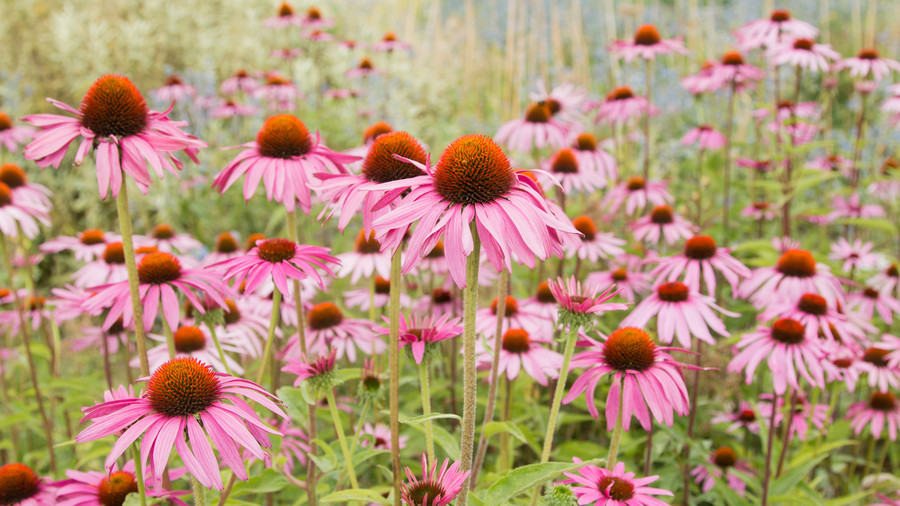 Low-Maintenance Perennials for Your Southern Garden - Southern Living