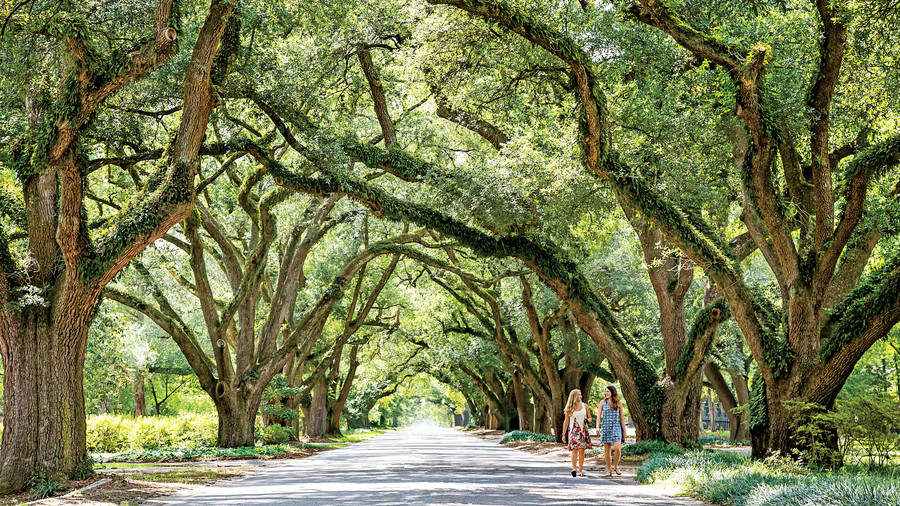 Oak Tree-Lined Streets
