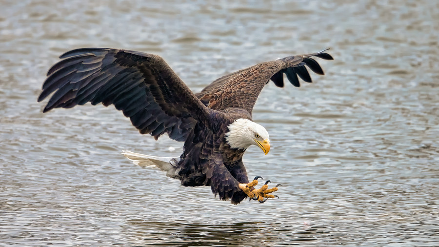 Birds of Prey 101: Raptors You'll Commonly Find in the South