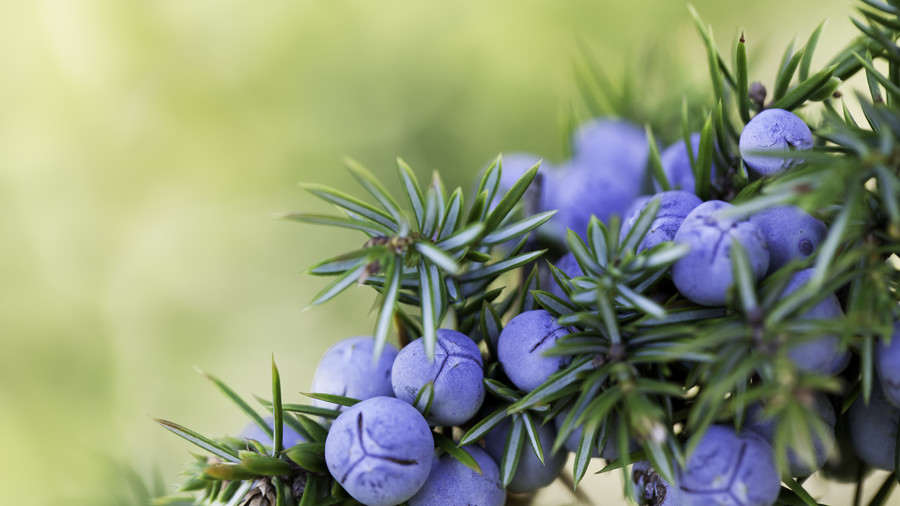 10 Plants for Cold-Weather Containers