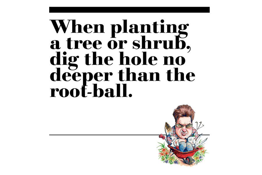 45. When planting a tree or shrub, dig the hole no deeper
