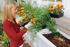woman planting orange flowers in white flower boxes to fix up the front of your house