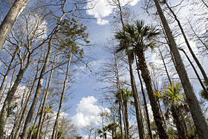 Florida Everglades, Loop Road: How to Help