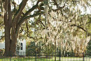 St. Francisville Spring Stroll