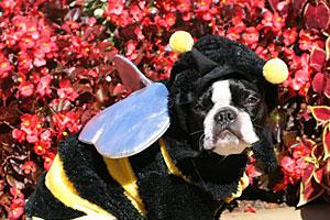 Bella the Bee