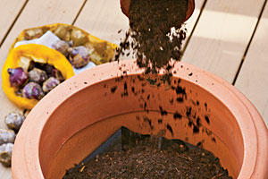 How to Plant Bulbs in a Container: Step Three