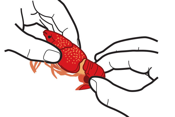 How To Eat Boiled Crawfish: Grasp
