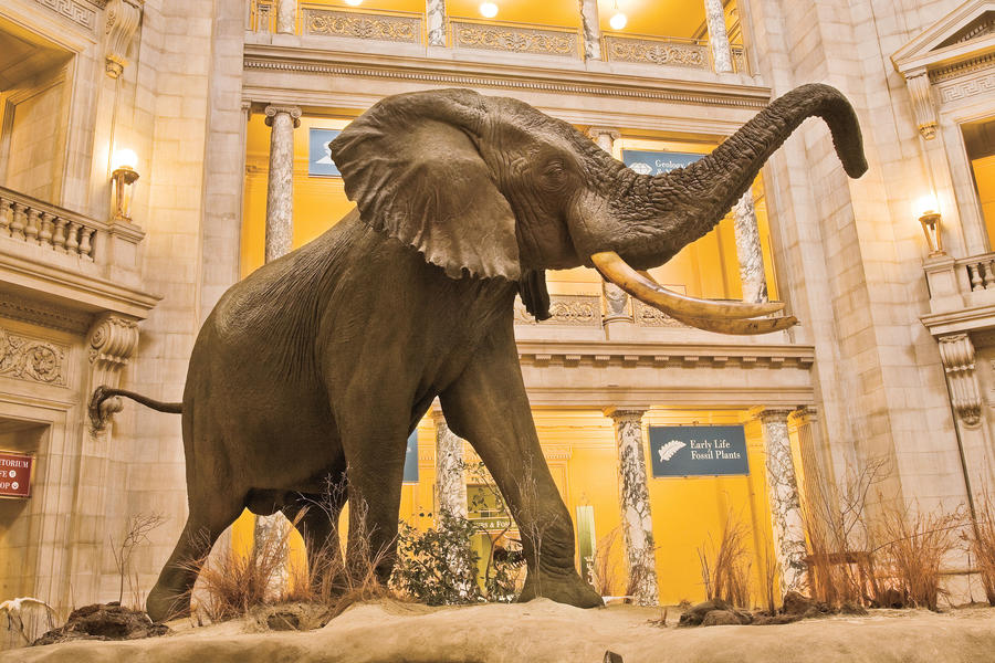 picture of Museum of Natural History