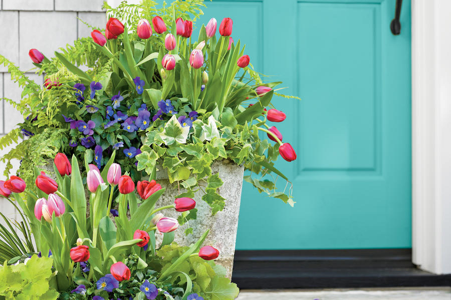 Tulips, Pansies, Acorus, Heuchera, Ivy and Fern