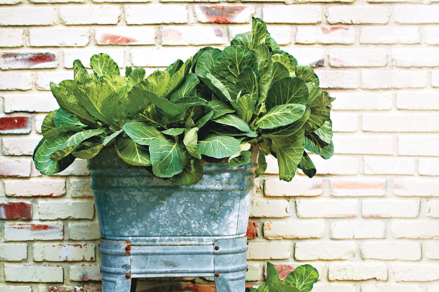 Fresh Decorative Collards