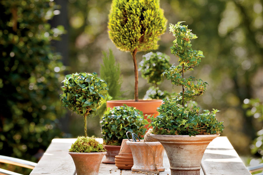 Mix and Match Topiary Tree Sizes