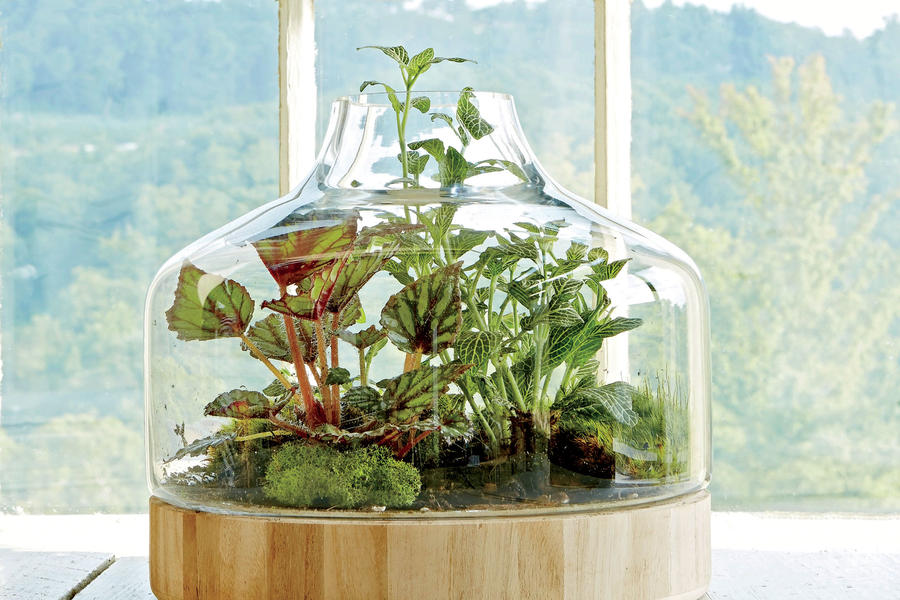 Plant a little glass house indoor container garden ideas for Indoor gardening glasses