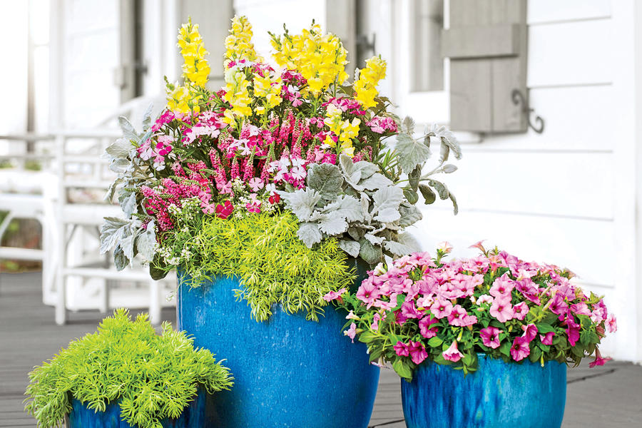 A Quick Container Combo - Spectacular Container Gardening Ideas - Southern Living