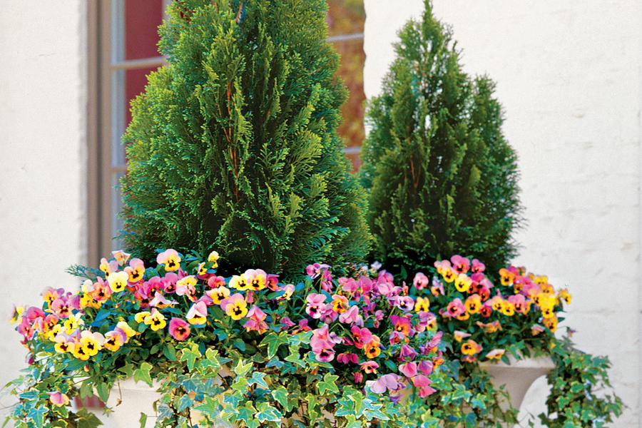 Evergreens and Annuals