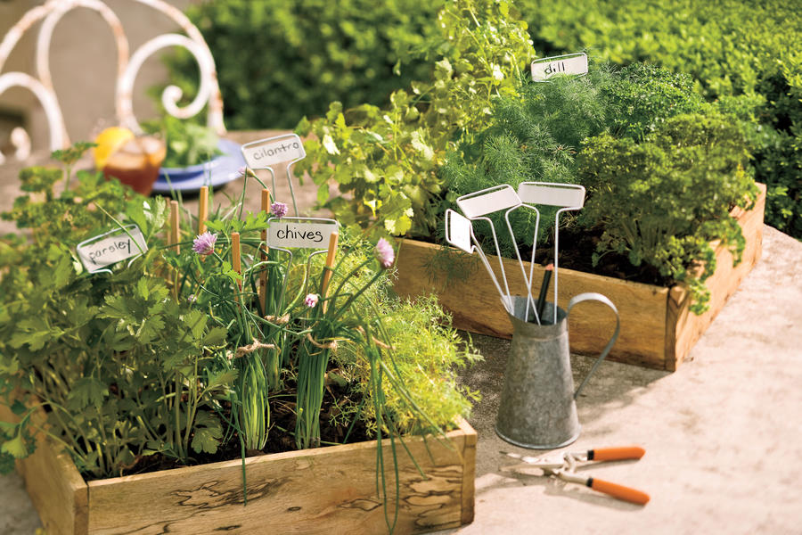 Grow These Herbs in Winter