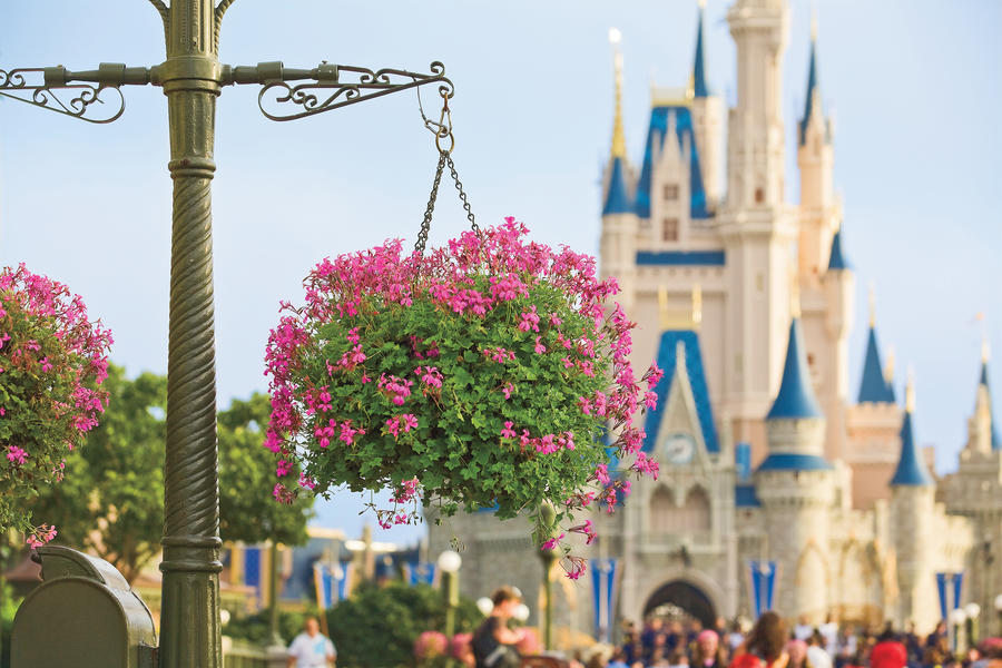 Why Grow Hanging Baskets