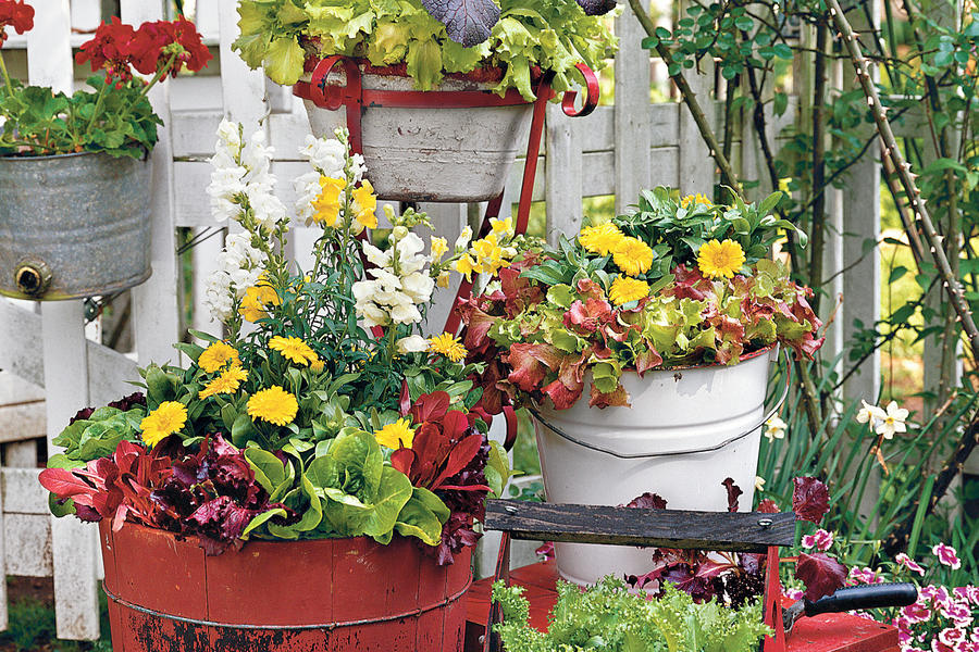 Lettuce and Ornamentals