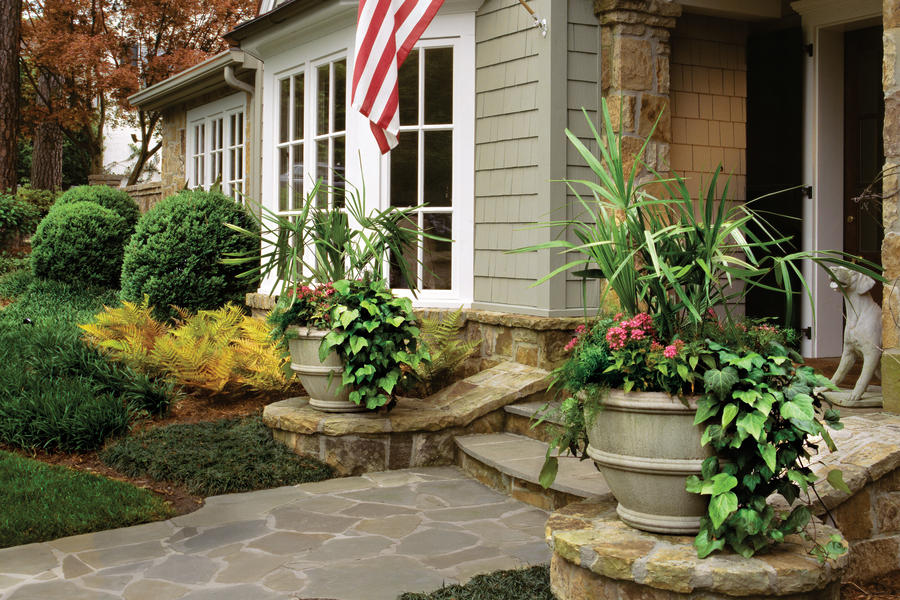 Trailing Algerian Ivy, Needle Palm, & Colorful Annuals