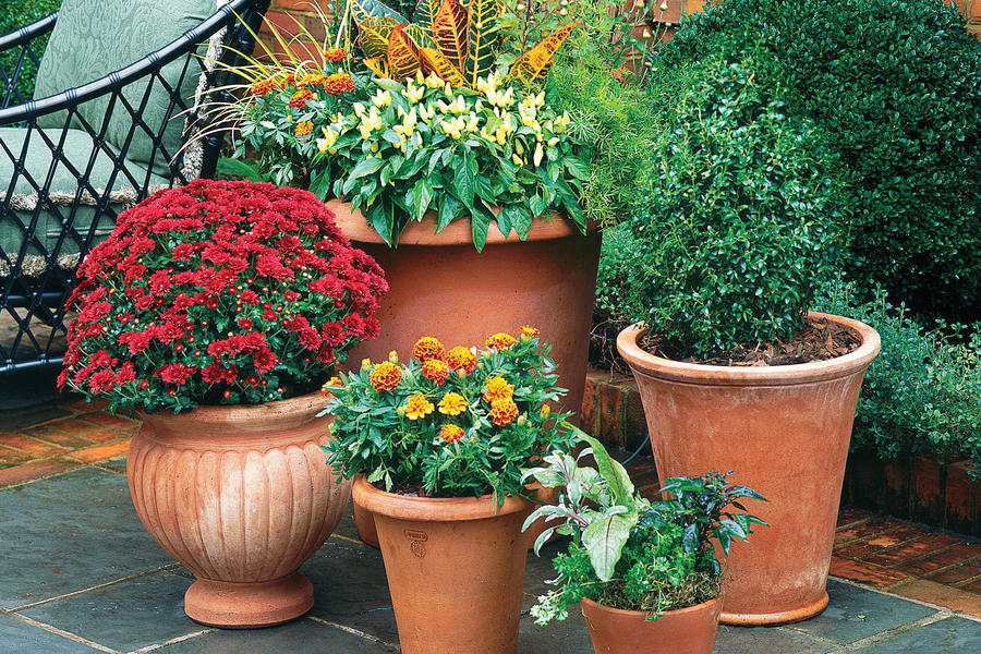 Mums, Marigolds, Peppers, & Crotons