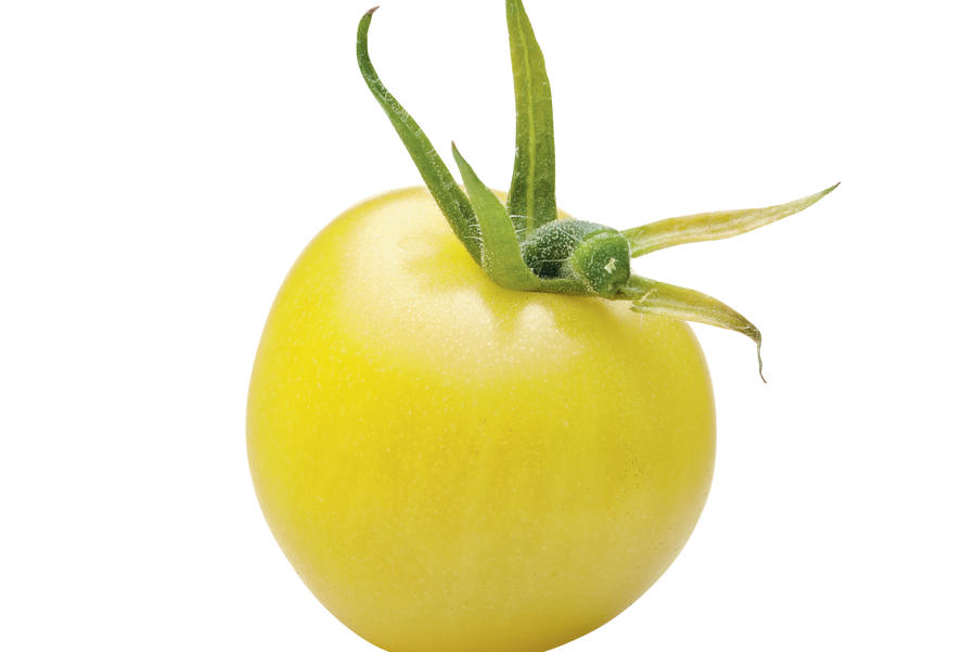 Lemon Cherry Tomato
