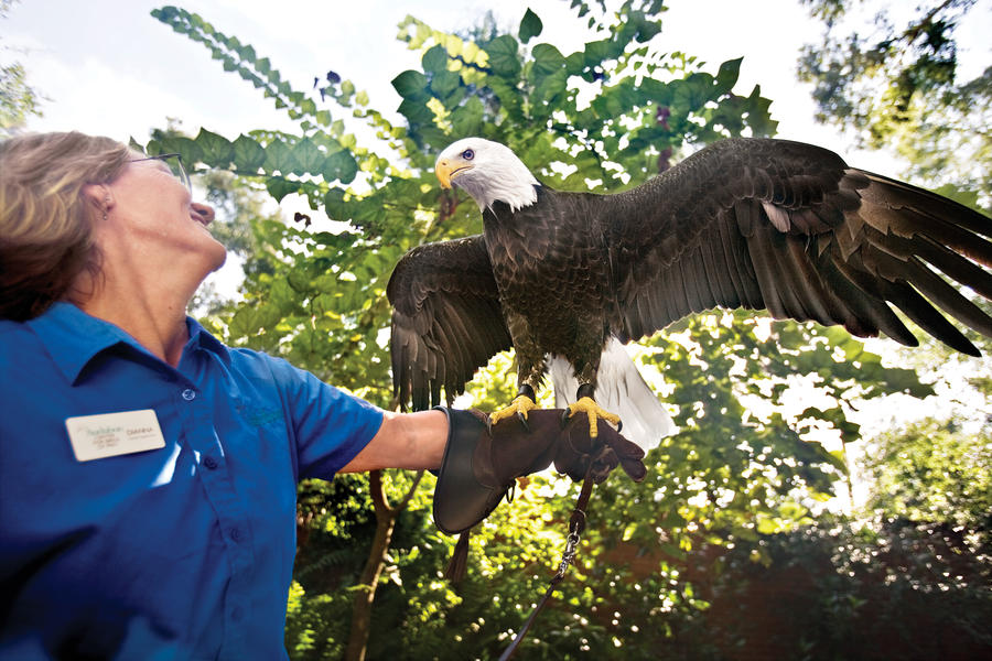 Bald Eagle Research