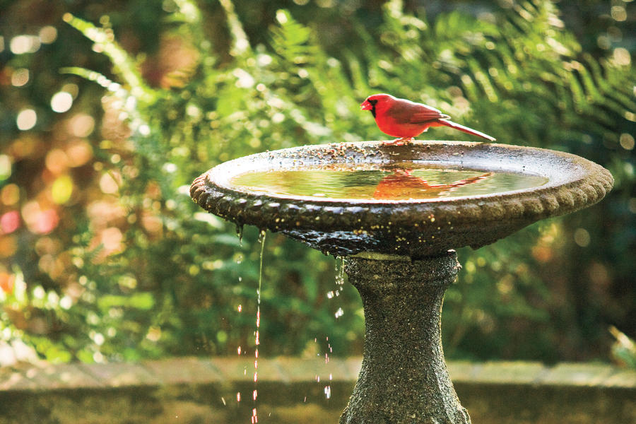 Keys to Attracting Birds