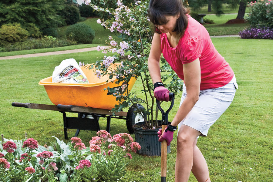How to Plant a Crepe Myrtle with Success: Step 1