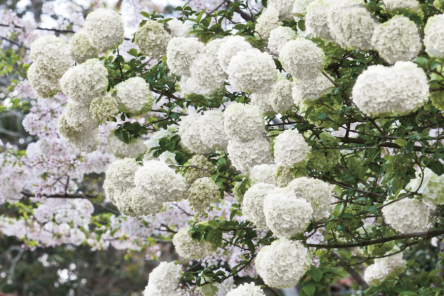 Grow Blooming Shrubs