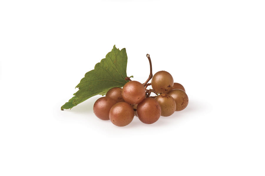 'Dixie Red' Muscadine Varieties