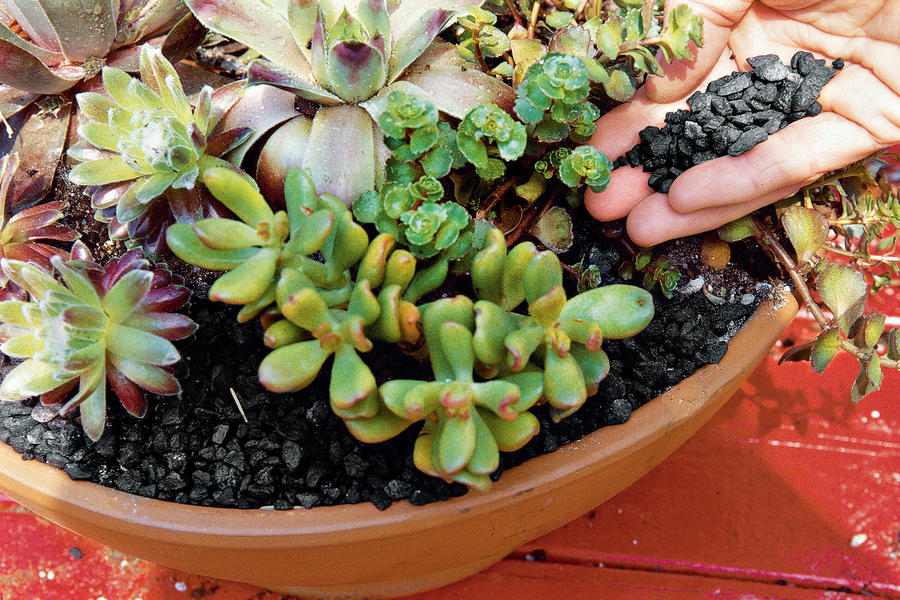 Planting Succulent Containers: Step Four