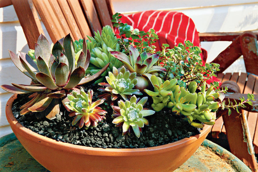 How to plant succulents in containers southern living - How to make a succulent container garden ...