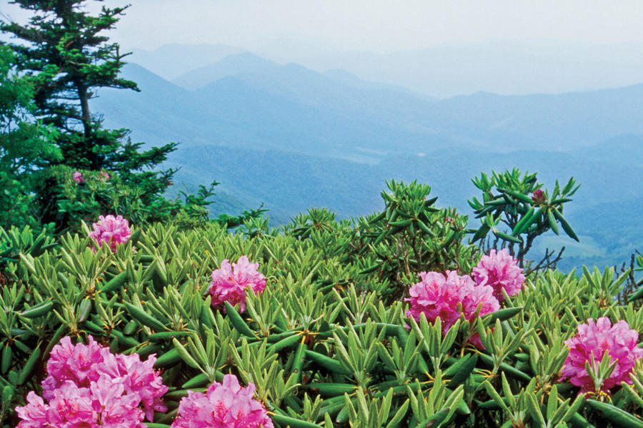 Hike the Revamped Roan Mountain, North Carolina/Tennessee