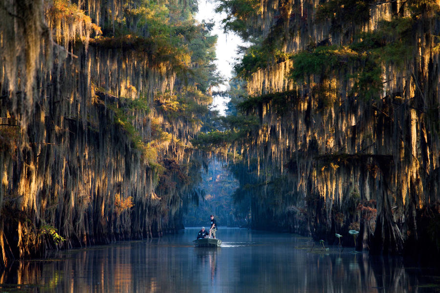 Caddo Lake, TX/LA